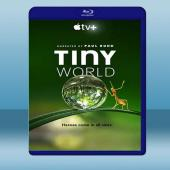 小小世界 Tiny World (1碟) 藍光25G